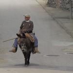 man_donkey01